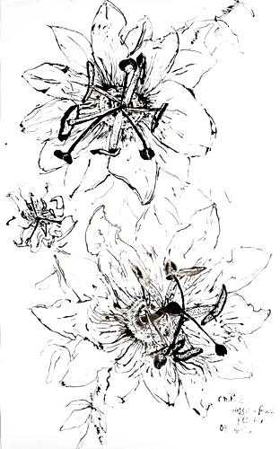 Christian Peltenburg Brechneff - Passion Fruit Flower Drawings